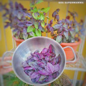 Basilico rosso - Foto di Sossupermamma -