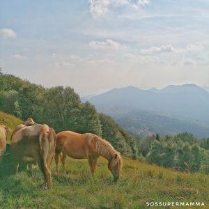 Cavalli al pascolo - Foto di Sossupermamma -