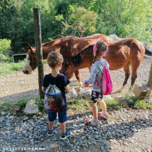 I cavalli a Terz'Alpe - Foto di Sossupermamma -